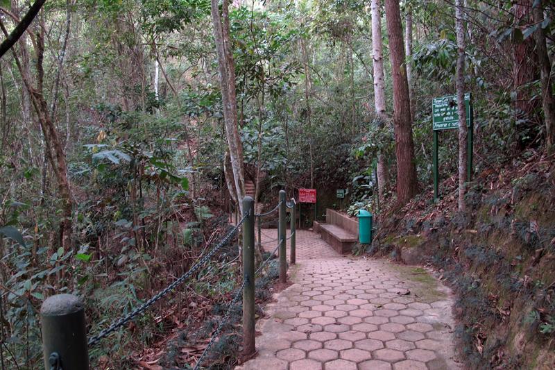 Trilha na Cachoeira das Andorinhas