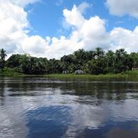 Manguezal na baía de Camamu