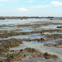Corais da terceira praia