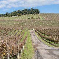 Vale dos Vinhedos: as vinícolas de Bento Gonçalves